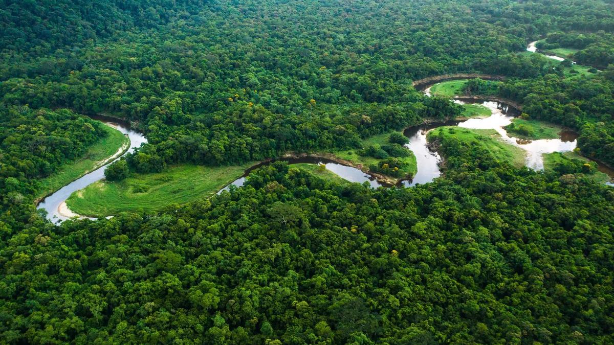 Amazon carbon emissions