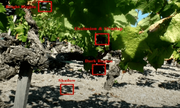 Yield calculation for the Smart Vineyard project