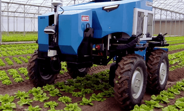 Robotizing crop weeding with HKTC and CAPACITES