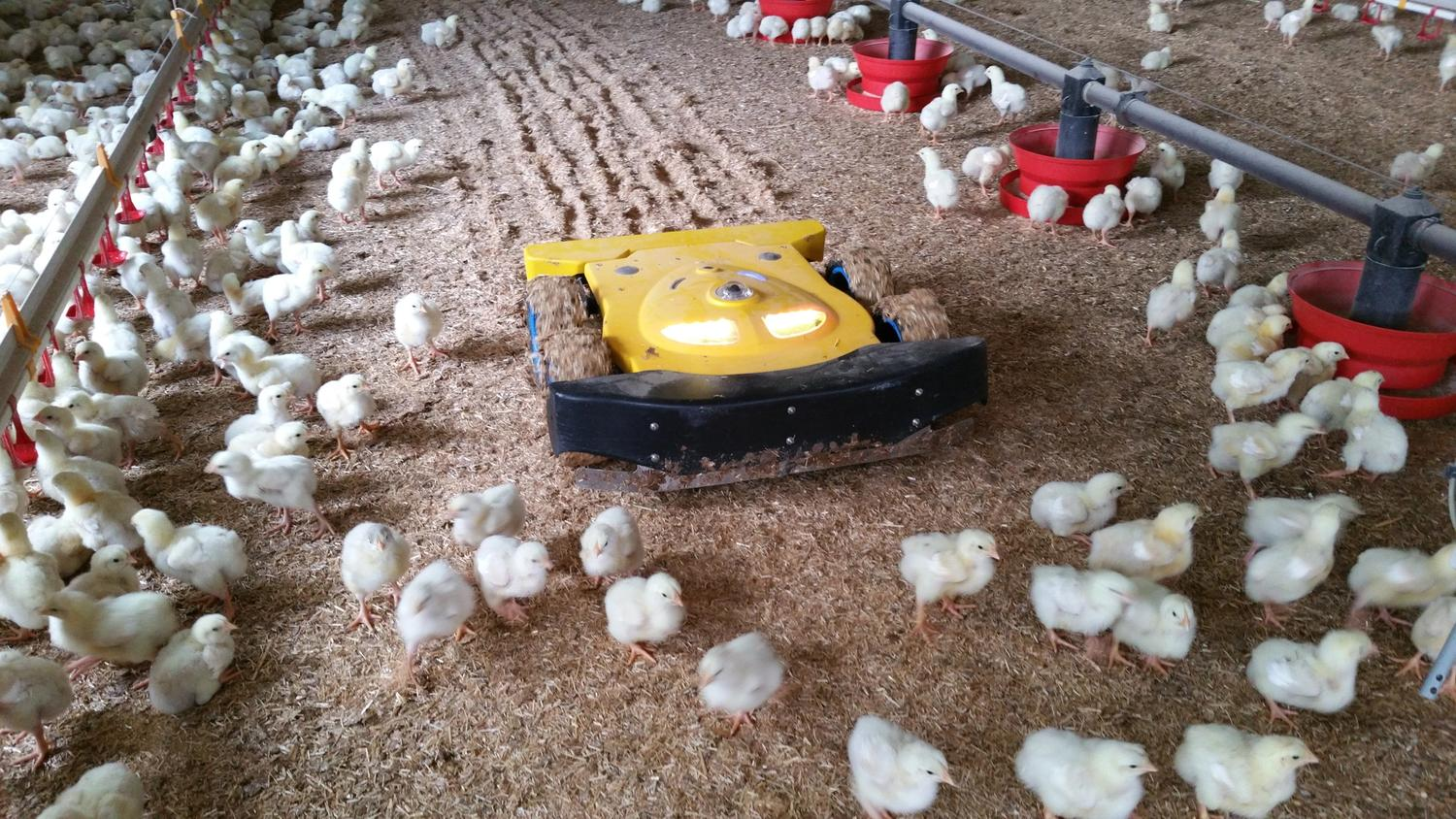 Poultry Robot TIBOT Technologies