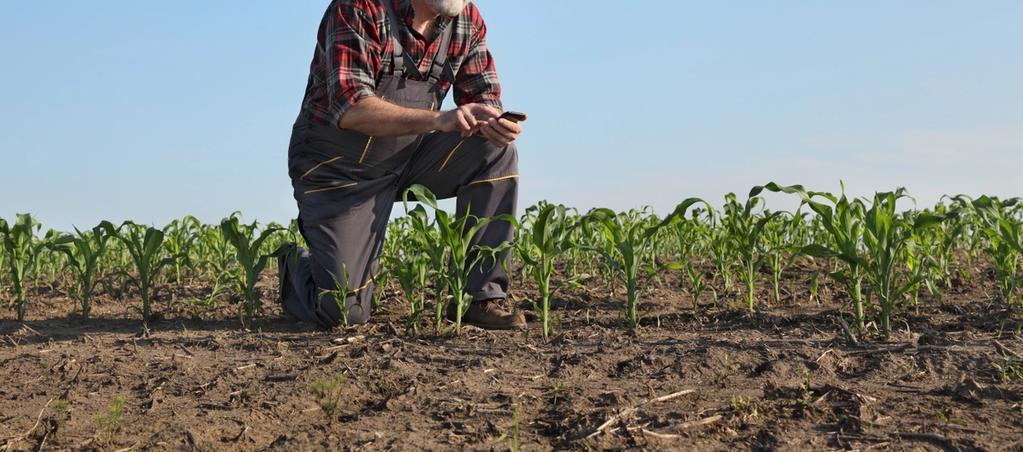 Le rôle des robots dans les systèmes agricoles de demain