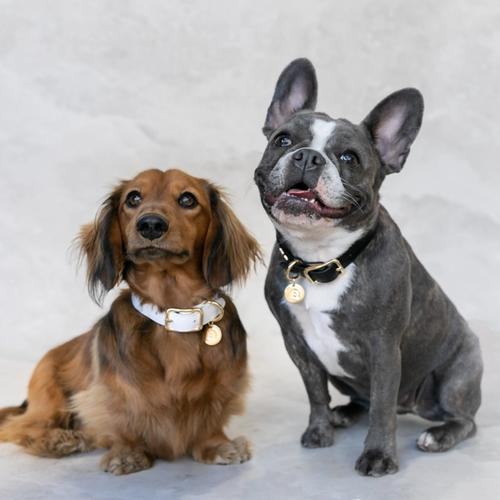 Bared_Footwear_Off_Cut_Collars_Two_Dogs