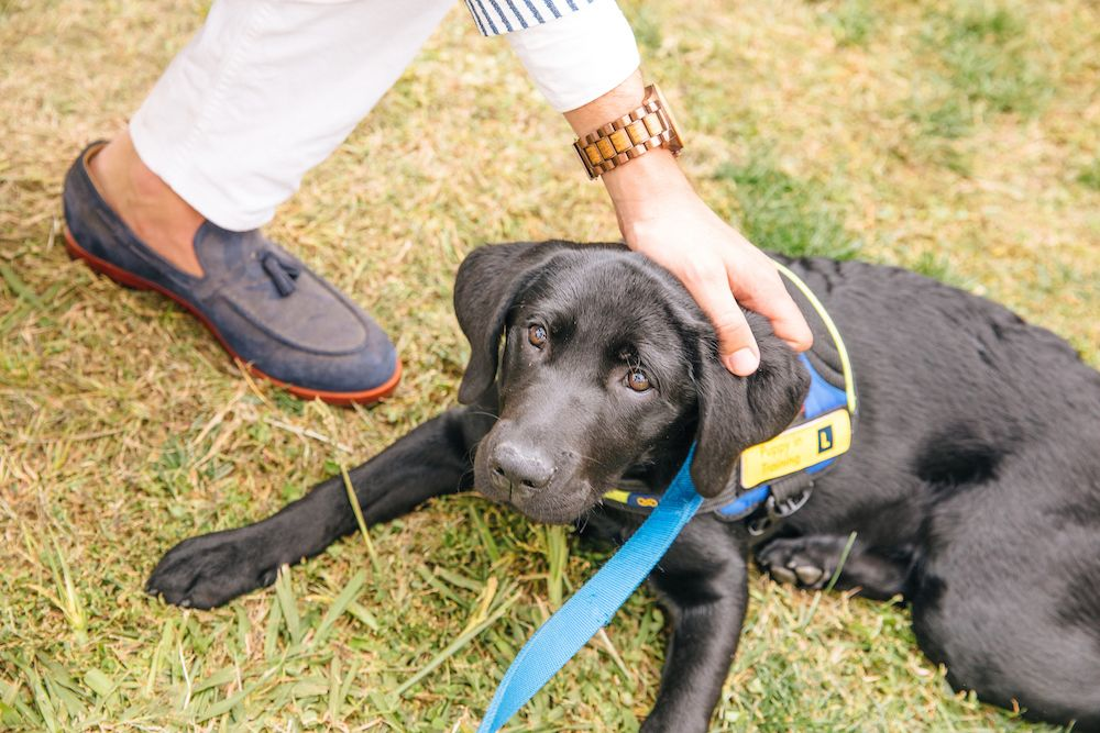 Bared_Footwear_All_Saints_Polo_Flossy_The_Labrador