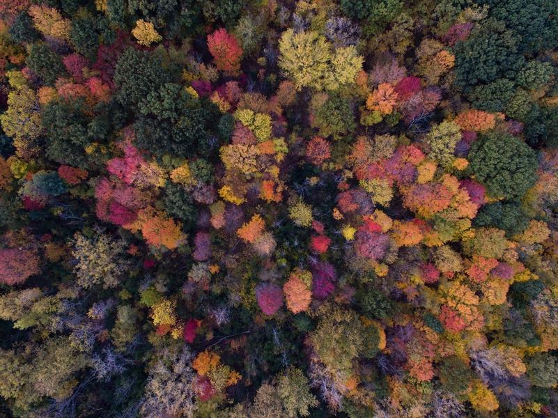 The World Forest Organisation