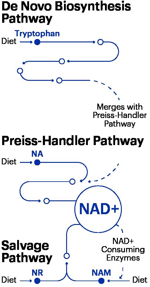 Mnnad Pathways Graph2