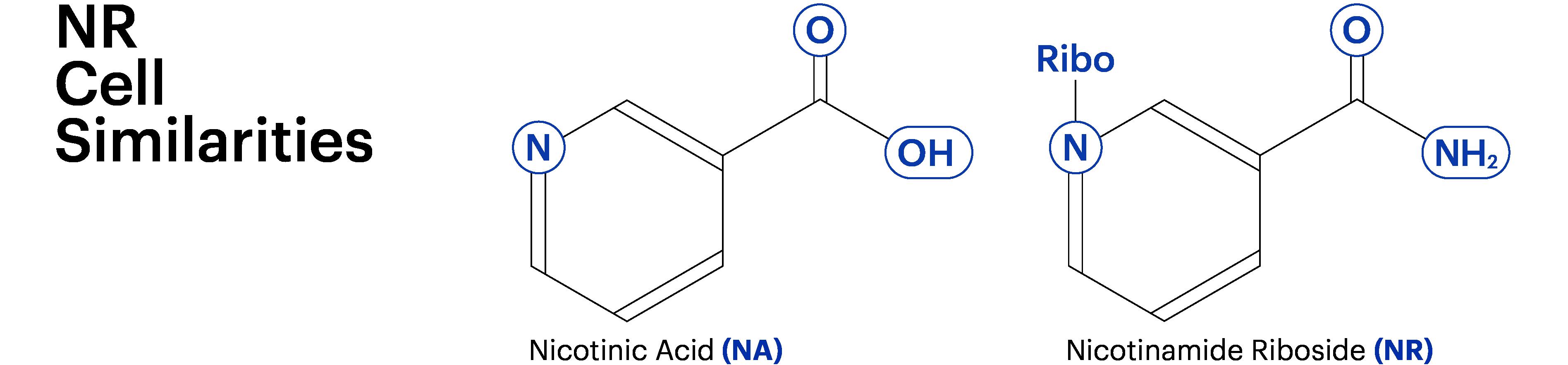 Nicotinamide Riboside: NR Benefits for Health and Aging