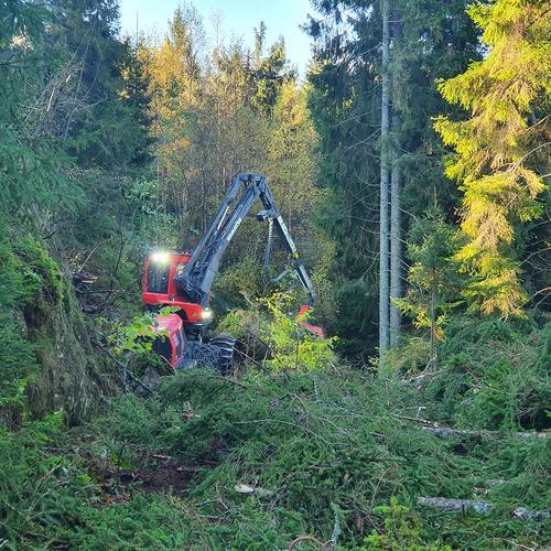 Fortsatt behov for støtte i skogen