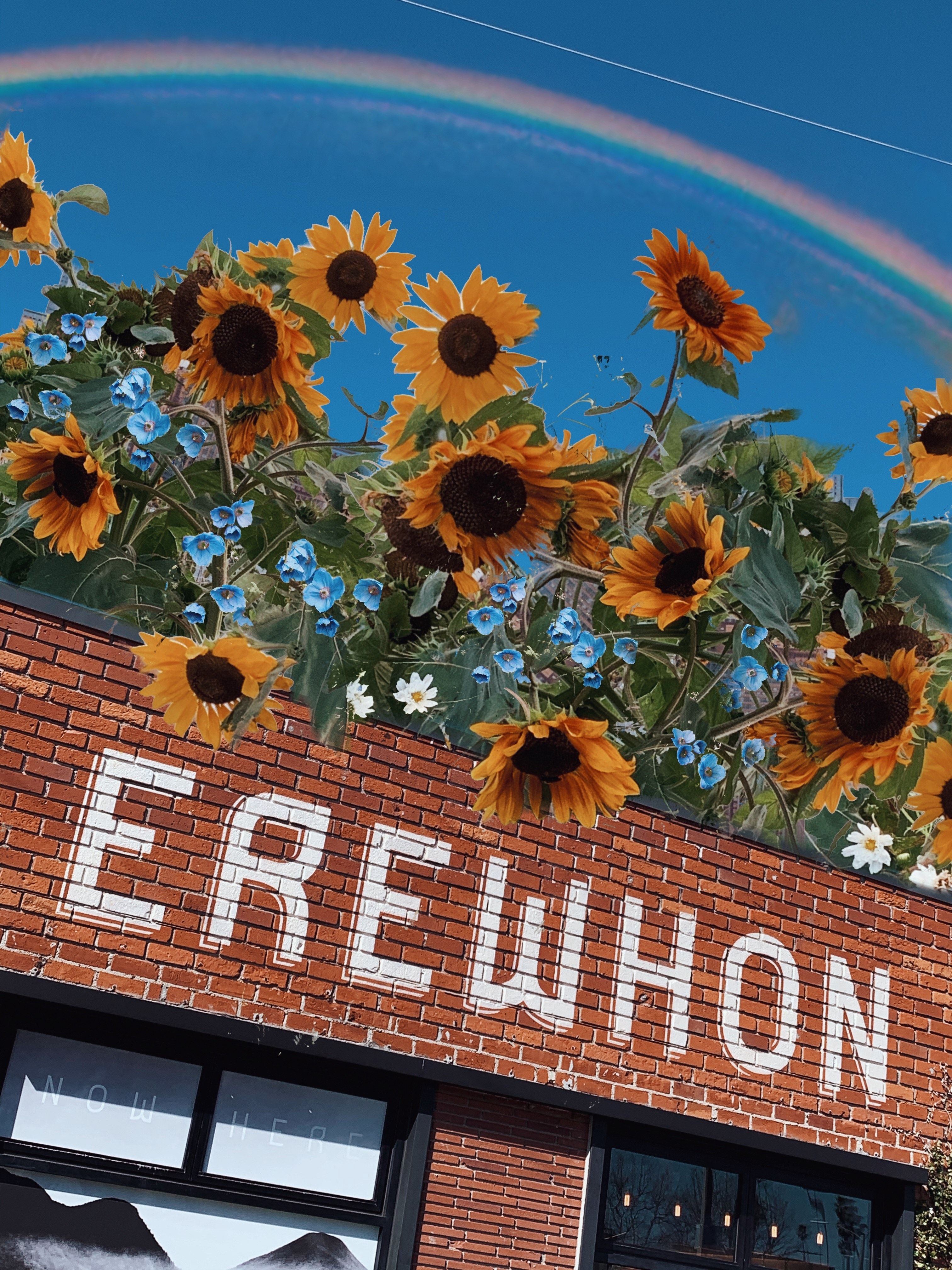 Erewhon Venice with sunflowers